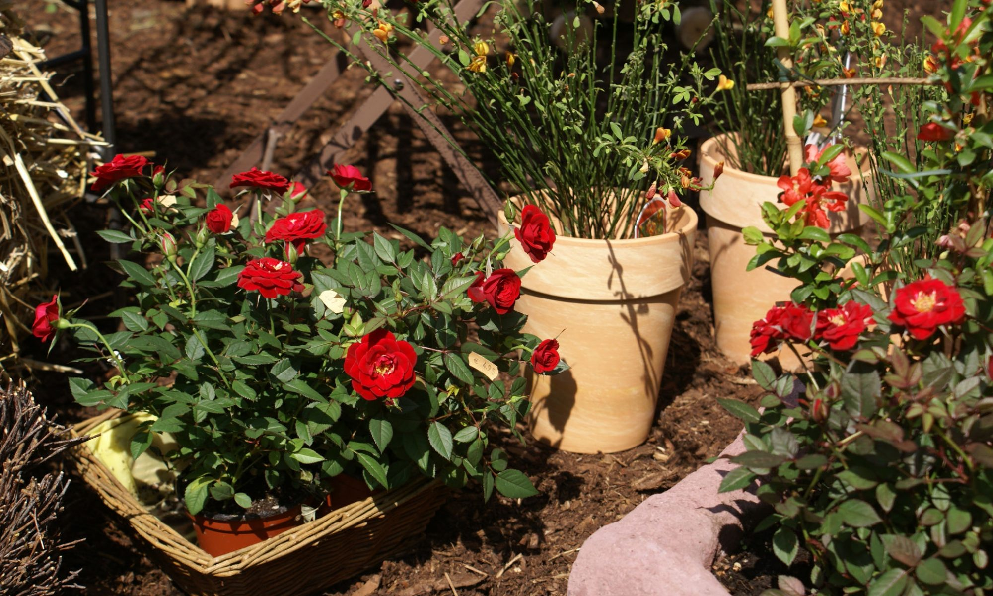 Blumengalerie Deger Schlüchtern